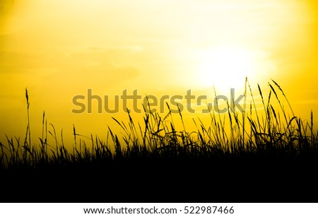 Beautiful sunset with silhouette meadow background. Vintage Warm tones.