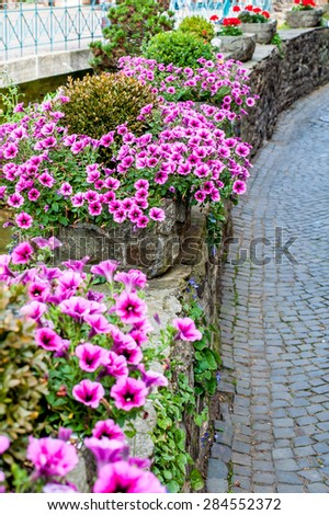Beautiful Surfina petunias in flower beds on a street - stock photo