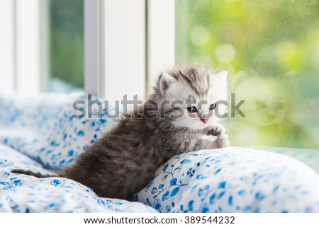 Beautiful tabby kitten lying on the bed. - stock photo