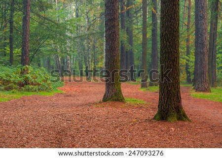 beautiful tall trees in summer forest morning - stock photo