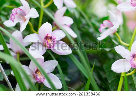 Beautiful tender orchids in a garden taken with low dof - stock photo