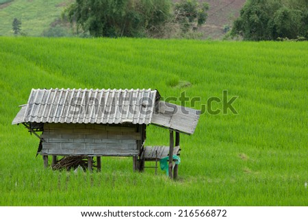 Beautiful terrace rice fields in Chaing Mai, Thailand - stock photo