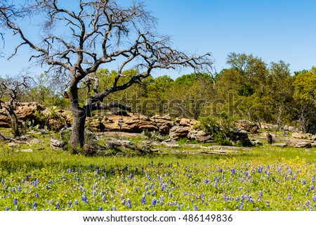 Beautiful Texas Hill Country ranch with granite rock mound, bluebonnets and oak trees on a sunny day.