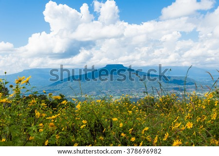 Beautiful Thailand landscape with hills and low clouds with flower forground