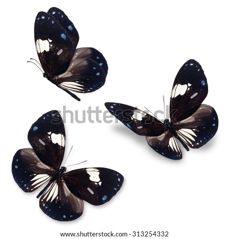 Beautiful Three Black and white butterfly isolated on white background.