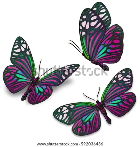 Fancy Butterfly Colorful Scheme Exotic Nature Stock Photo 469725602 ...