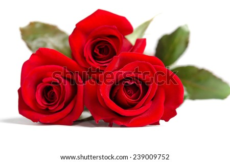 beautiful three red roses isolated on white background
