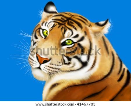 beautiful tiger on turn blue - stock photo