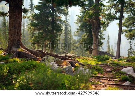 Beautiful trail through the trees in the forest taiga. Natural Park Ergaki - stock photo