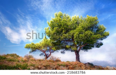 beautiful tree against a blue sky  - stock photo