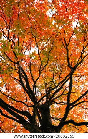 Beautiful tree during fall