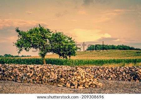 Beautiful tree growing from a pile of wood - stock photo