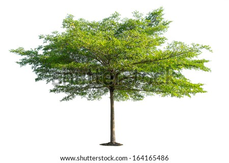 Beautiful Tree isolated on white background