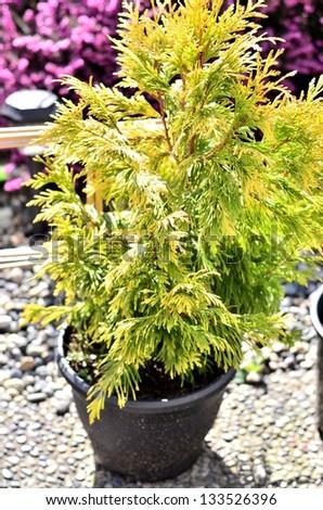 Beautiful tree pot in the garden - stock photo
