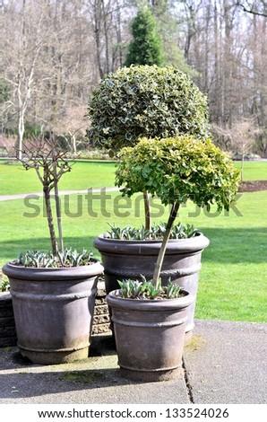 Beautiful tree pot in the park - stock photo