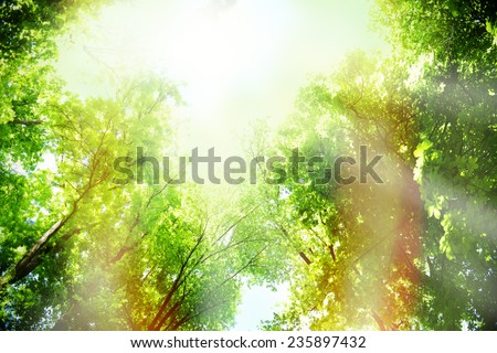 Beautiful trees in forest - stock photo