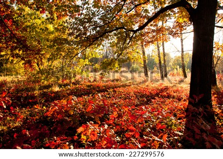 beautiful trees of an autumn forest in a park. Ukraine