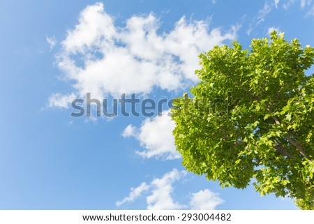 Beautiful trees on sky background
