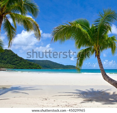 beautiful tropical beach with coconut palm trees
