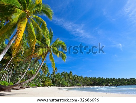Beautiful tropical beach with palms - stock photo