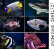 Beautiful tropical fish collection - stock photo