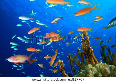Beautiful Tropical Fish on a Coral Reef - stock photo