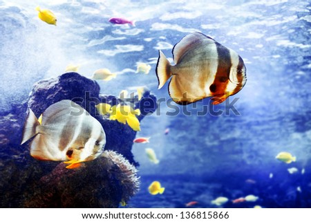 Beautiful tropical fishes - stock photo