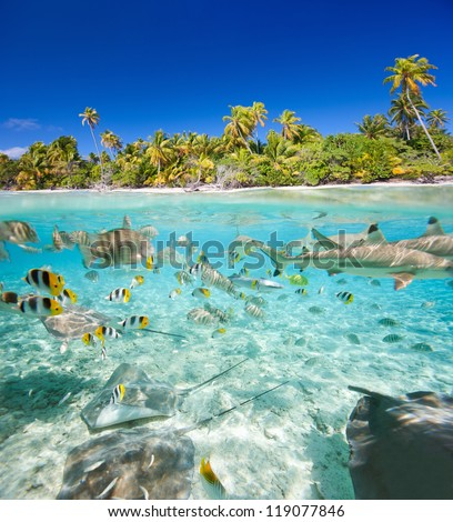 Beautiful tropical island above and underwater - stock photo