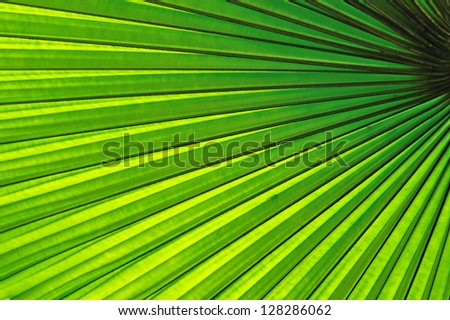Beautiful tropical palm leaf - stock photo