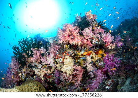 Beautiful tropical underwater corals on a reef surrounded by clean, blue water with the sun shining bright in the sky.Shot in Fiji. - stock photo