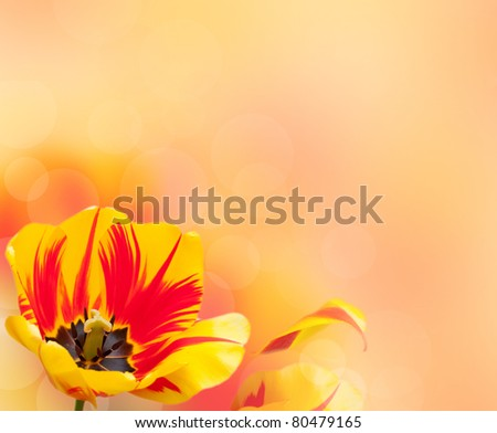 Beautiful tulip border over blurred background - stock photo