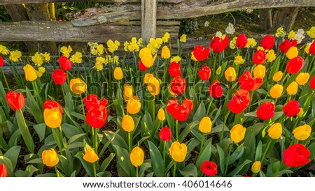 Beautiful tulips in the spring. Variety of spring flowers blooming in beautiful garden. Landscape design - the flower beds of tulips. - stock photo