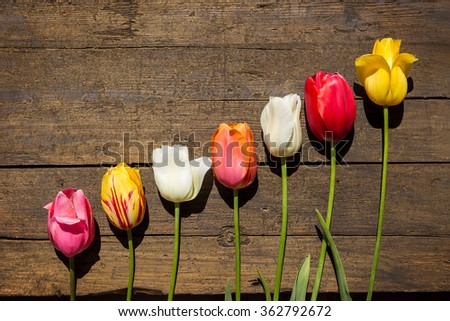 beautiful Tulips on a brown wooden background and copyspace - stock photo