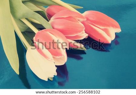 Beautiful tulips on blue metallic background - stock photo