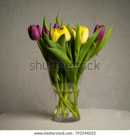 Beautiful tulips on gray background. Nice details of colorful flowers.