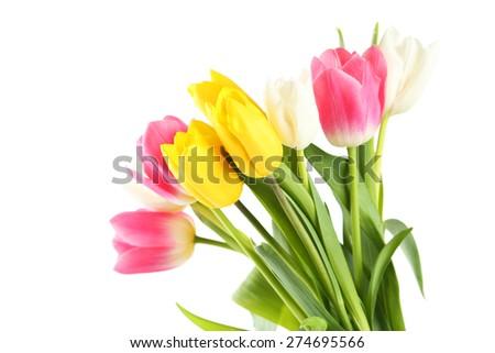Beautiful tulips on white background - stock photo