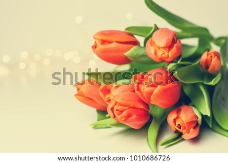 Beautiful tulips on white background. Mothers Day