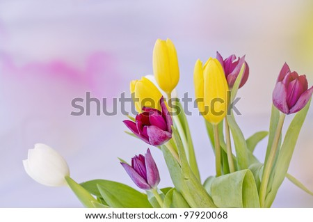 Beautiful tulips with great colors and amazing light