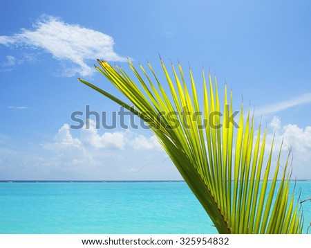 Beautiful turquoise lagoon and blue sky with a palm leaf in the Maldives.  - stock photo