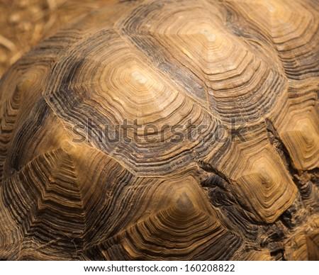 Beautiful turtle shell design - stock photo