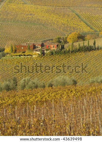 beautiful tuscan vineyards  in autumnal colors, Chianti, Italy - stock photo