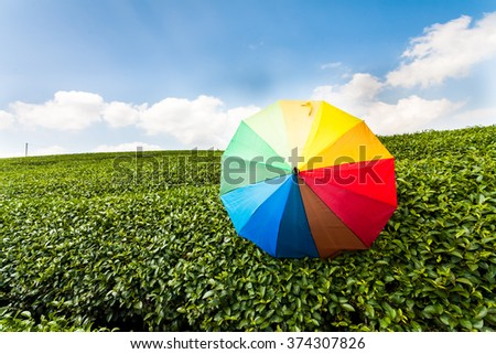 beautiful umbrella in green tea fields and blue sky