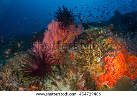 Beautiful underwater landscape with healthy reefs and corals and schooling fishes in shallow water. Incredible colors of the sea. Indonesia - stock photo