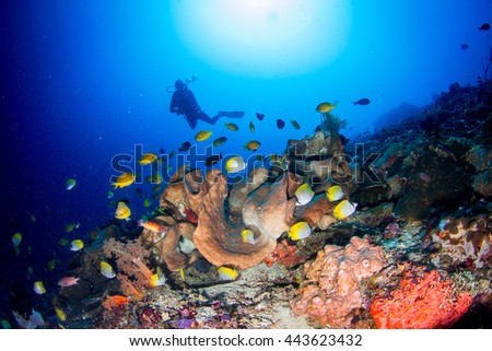 Beautiful underwater view with butterflyfish and silhouette of a diver behind. Healthy coral reef, with lots of schooling fishes, light and hard and soft corals. Nusa Penida, Indonesia.  - stock photo