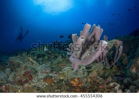 Beautiful underwater view with hard and soft corals and sponges and silhouette of a diver behind. Coral fishes in shallow water. Nusa Penida, Indonesia. - stock photo