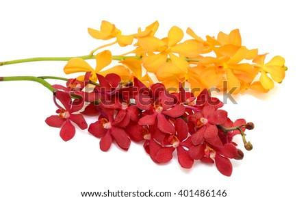 beautiful vanda orchid flowers, isolated on white background - stock photo