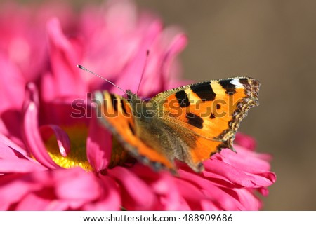 beautiful varicolored butterfly sits on beautiful flower