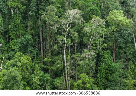 Beautiful vibrant background consisting of trees in the rain forest