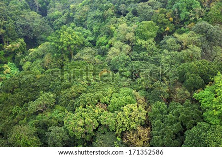 Beautiful vibrant background consisting of trees of the rain forest of Central America. Guatemala - stock photo