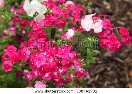 Beautiful vibrant flowers surrounded by green leaves - stock photo